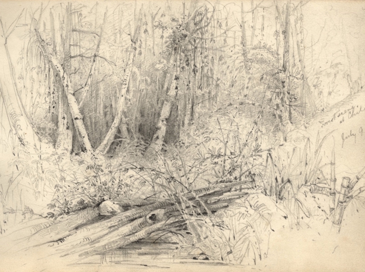 Conard Martens, Forest scene at Chiloé, from the second voyage of HMS Beagle
